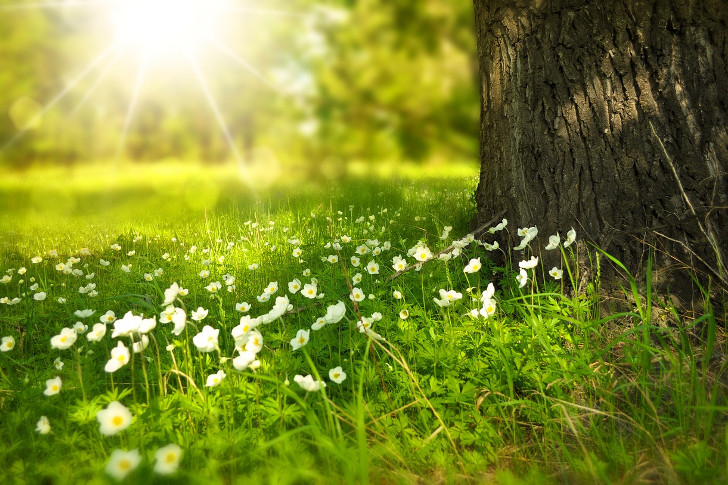 Dia da Primavera